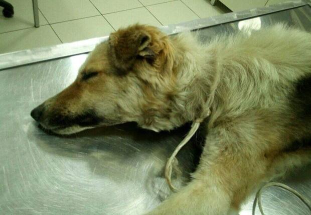 Vezali psa i čekali da ugine od gladi i žeđi