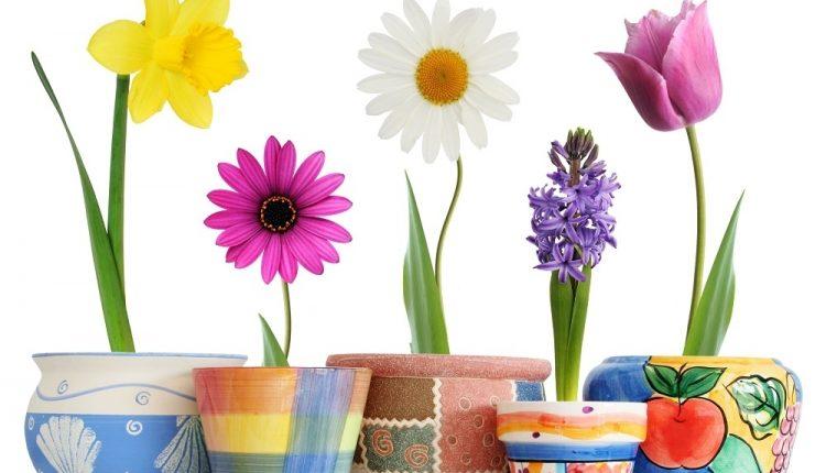 Izaberite cvet koji vas najviše privlačI i saznajte koje tajne skriva vaš karakter