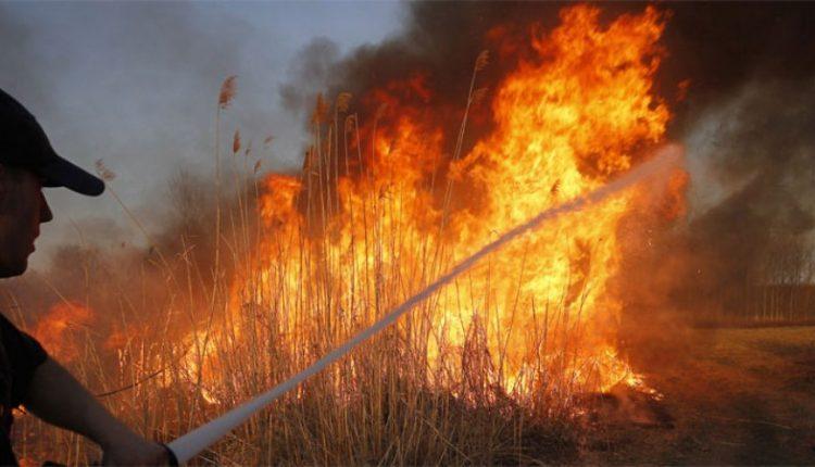 Veliki požar kod Negotina, vatru gasi i vojni helikopter