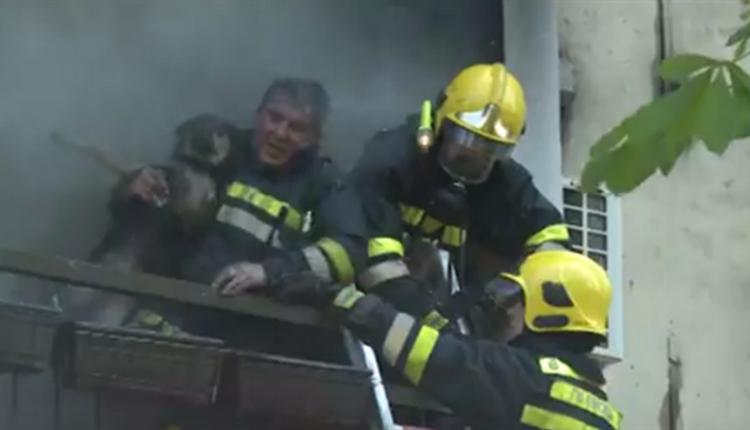 Požar u Zaječaru, žena stradala u svom stanu (VIDEO)